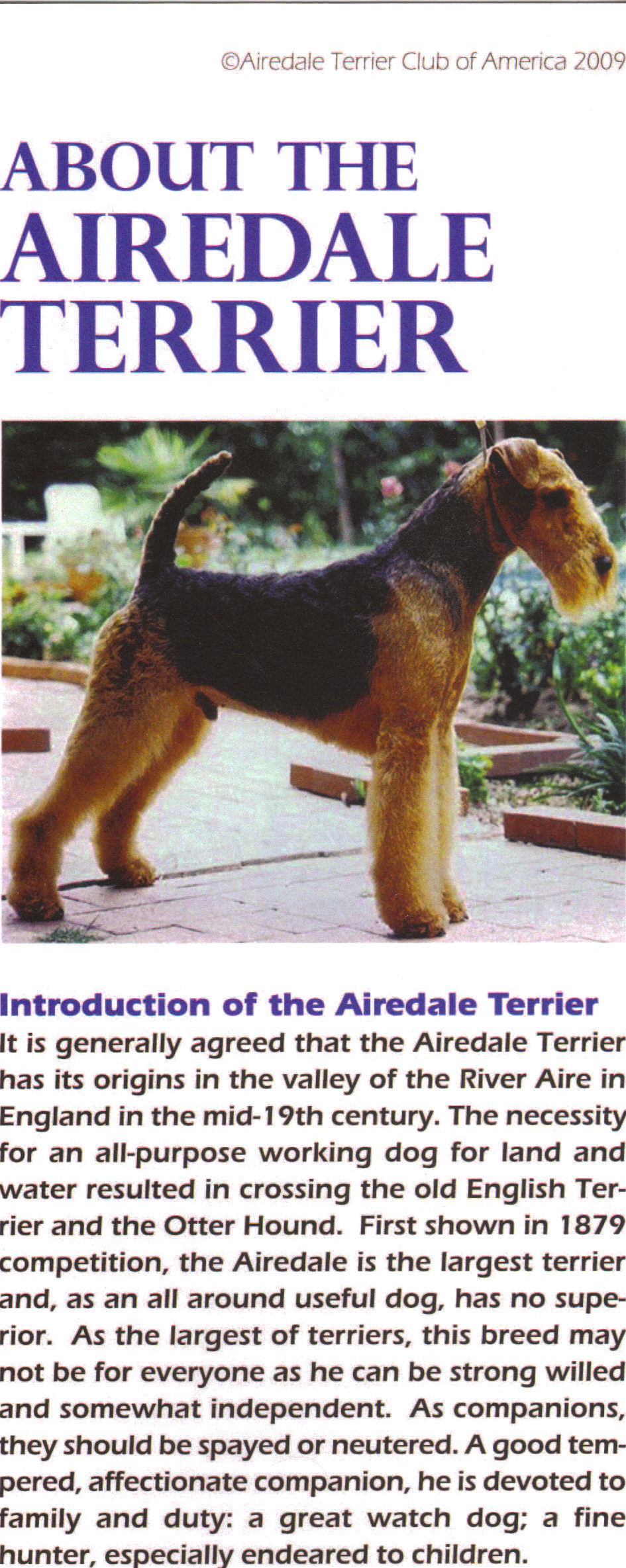 airedale terrier club of america - HD945×2369